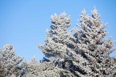 Schneewald Stockfotografie