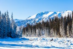 Schneewald im Winter Der schneebedeckte Gongnaisi-Wald im Winter lizenzfreie stockfotografie