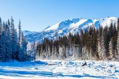 Schneewald im Winter Der schneebedeckte Gongnaisi-Wald im Winter lizenzfreies stockbild