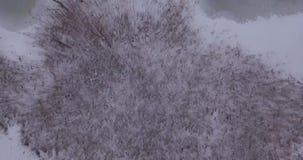Schneewald, Kamera niedrig über dem Wald, gefrorener See stock video footage