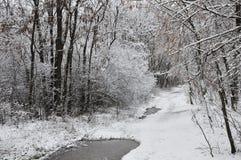 Schneewaldung Stockfoto