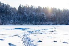 Schneeweg zum Wald Lizenzfreie Stockfotos