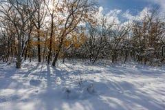 Schneewehen im Winterholz lizenzfreie stockfotografie