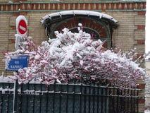 Schneeweiß auf Dachspitzen und roten Sträuchen Stockbild