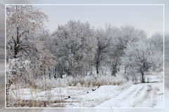 Schneeweißer Winter Schöne Landschaft Lizenzfreie Stockfotos