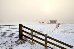 Schneeweide im dichten Nebel Lizenzfreies Stockbild