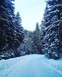 Schneeweise Lizenzfreie Stockbilder