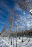 Schneewinter Stockfotos