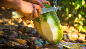 Schneiden des frischen ausgewählten Jackfruit lizenzfreie stockfotografie