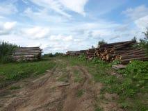 Schneiden Sie Bäume Lizenzfreies Stockbild