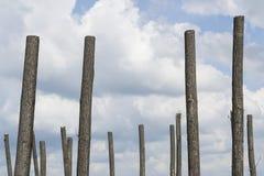 Schneiden Sie Bäume ab Lizenzfreies Stockfoto