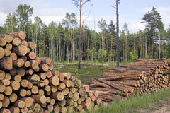 Schneiden Sie Bäume im Naturhintergrund Stockfotos