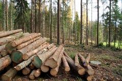 Schneiden Sie Bäume im Wald Stockfoto