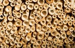 Schneiden Sie Bambusstockhintergrund Lizenzfreie Stockfotografie