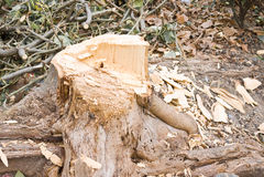Schneiden Sie Baum Lizenzfreie Stockbilder