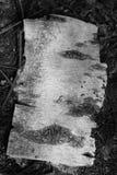 Schneiden Sie Baum ab Stockbild