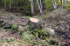 Schneiden Sie Baum in einem Holz stockfoto