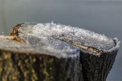 Schneiden Sie Baumstamm mit Schnee Lizenzfreies Stockbild