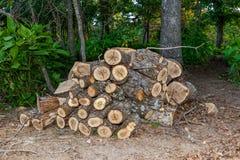 Schneiden Sie Brennholz Stockfotos