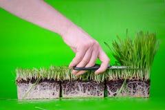 Schneiden Sie dieses Gras Stockfoto