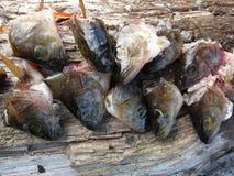 Schneiden Sie Fischköpfe ab Stockfoto