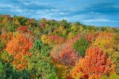 Schneiden Sie Fluss Autumn Color Stockfotos
