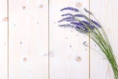 Schneiden Sie frisch Lavendel Stockfotografie