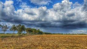 Schneiden Sie Getreidefeld stockbilder