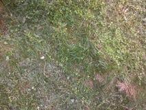 Schneiden Sie Gras Stockbild