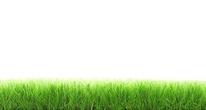 Schneiden Sie Gras Lizenzfreies Stockbild