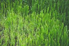 Schneiden Sie Gras Stockfotos