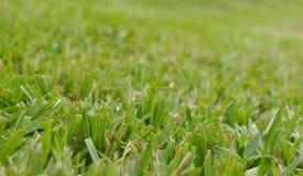 Schneiden Sie Grasbeschaffenheit Lizenzfreie Stockbilder