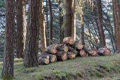 Schneiden Sie Holz in den Wäldern stockfoto