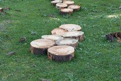 Schneiden Sie Holz in den Wäldern stockfotografie