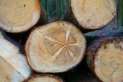 Schneiden Sie Holz im Wald Lizenzfreie Stockfotos