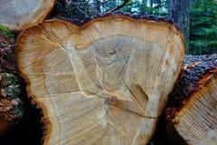 Schneiden Sie Holz im Wald Stockbilder