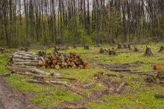 Schneiden Sie Kiefer auf der Seite des Holzes, Waldunfall Stockfotografie