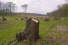 Schneiden Sie Kiefer auf der Seite des Holzes, Waldunfall Lizenzfreie Stockbilder