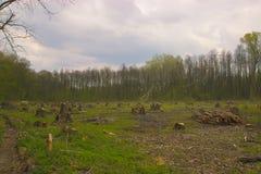 Schneiden Sie Kiefer auf der Seite des Holzes, Waldunfall Lizenzfreie Stockfotos
