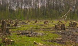 Schneiden Sie Kiefer auf der Seite des Holzes, Waldunfall Lizenzfreie Stockfotografie