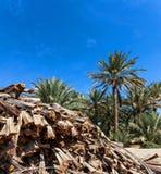 Schneiden Sie Palmenbaumaste in einer Oase Lizenzfreies Stockbild