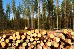 Schneiden Sie Protokolle am Rand des Waldes Lizenzfreie Stockbilder