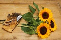 Schneiden Sie Sonnenblumen Lizenzfreie Stockfotos