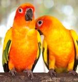 Schneiden Sie von den Papageien Stockbild