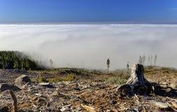 Schneiden Sie Wald über den Wolken Stockfoto