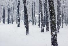 Schneien im Park Lizenzfreie Stockfotografie