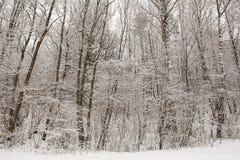 Schneien Sie auf Bäumen in der Winterwaldlandschaft Stockfotos