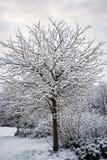 Schneien Sie auf Baumbrunchs im BRITISCHEN Winter - Vertikale Stockfotografie