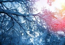 Schneien Sie auf Baumniederlassungen mit hellem Leckhintergrund Lizenzfreies Stockbild