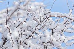 Schneien Sie auf den Niederlassungen eines Baums gegen den blauen Himmel Lizenzfreies Stockbild